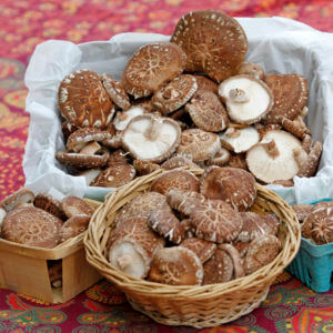 Shiitake Products