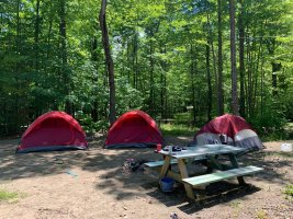 tent and picnic tables in the woods at the heron campground